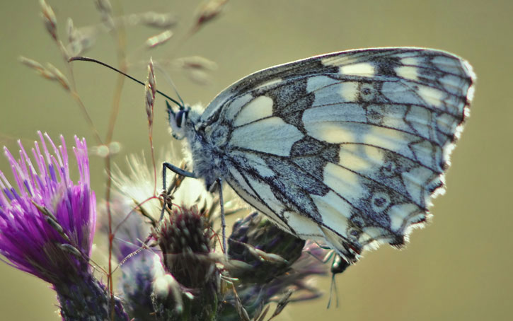 Butterfly in Scotland