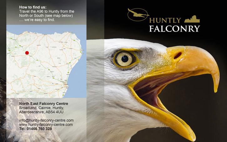 Huntly Falconry branding